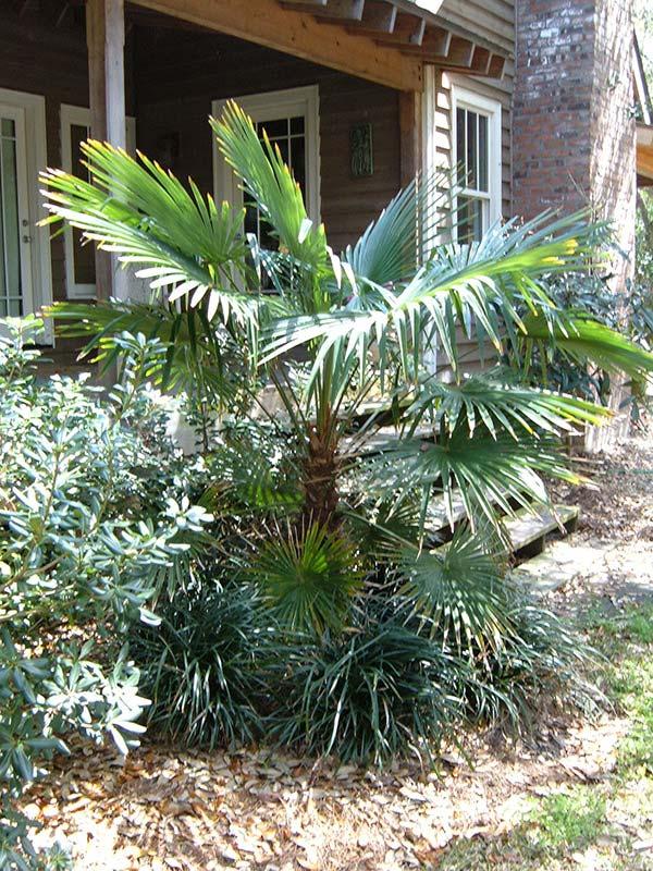 Get Right Enterprises | Palm Trees